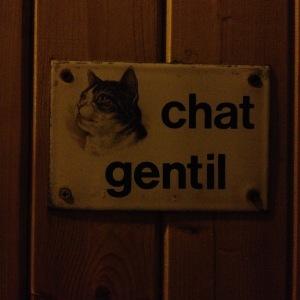 chat gentil